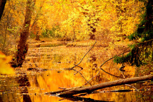 golden autumn free pic